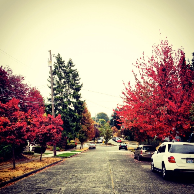 beautiful wallingford in the fall.